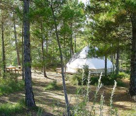 Forest Days Glamping